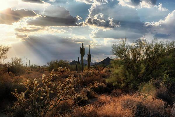 Wall Art - Photograph - As The Suns Starts To Set On The Sonoran  by Saija Lehtonen