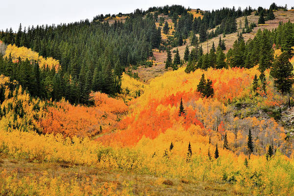 Photograph - Ashcroft Aspens by Ray Mathis