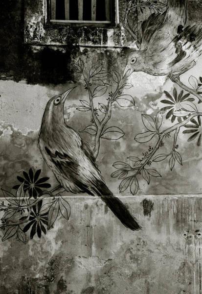 Photograph - Asian Bird by Shaun Higson