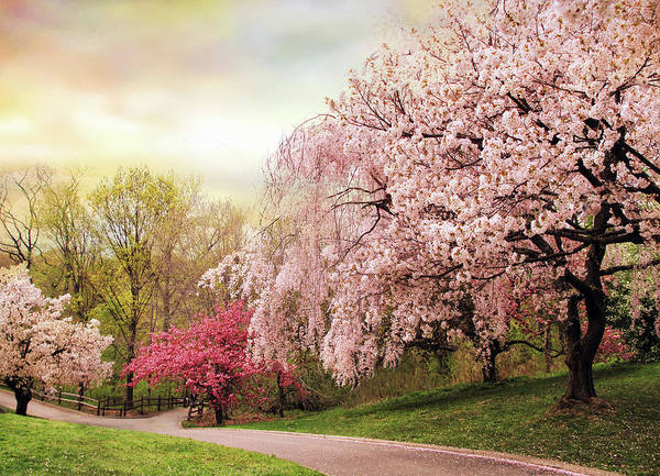 Cherry Trees Photograph - Asian Cherry Grove by Jessica Jenney