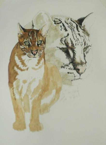 Mixed Media - Asian Golden Cat 4 by Barbara Keith