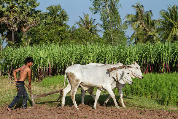 Cultivate Photograph - Asian Young Farmer Working The Field by Joakimbkk