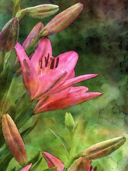 Photograph - Asiatic Lilies 1755 Idp_2 by Steven Ward