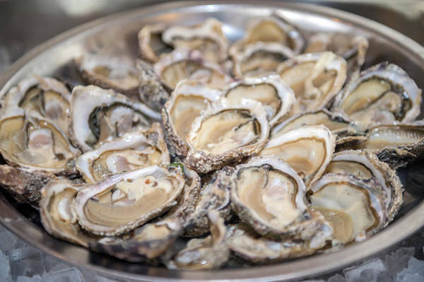 Wall Art - Photograph - Asnelle Bay Oysters, Cabourg, Normandy by Jim Engelbrecht