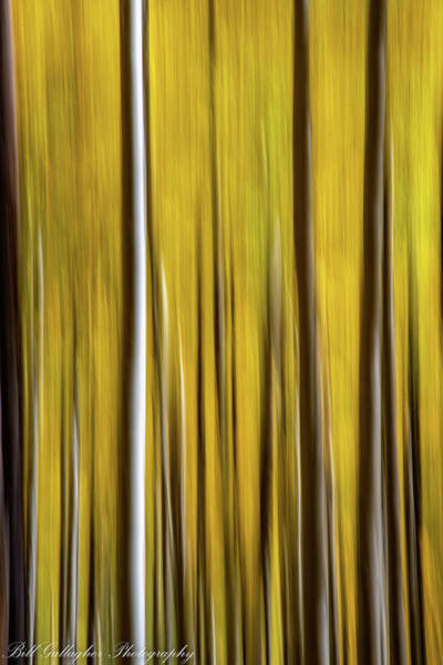 Photograph - Aspen Abstract by Bill Gallagher
