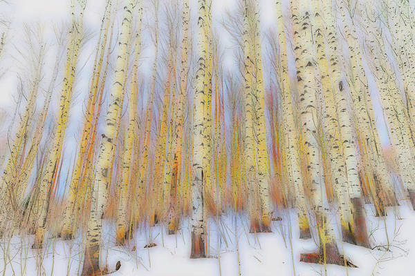 Wall Art - Photograph - Aspen Abstract by Eric Glaser