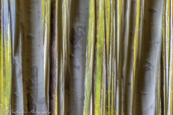 Photograph - Aspen Abstract II by Bill Gallagher