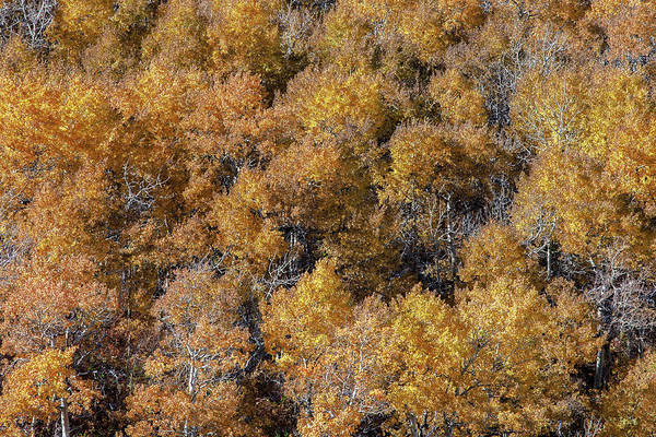Wall Art - Photograph - Aspen Autumn Leaves by Todd Klassy