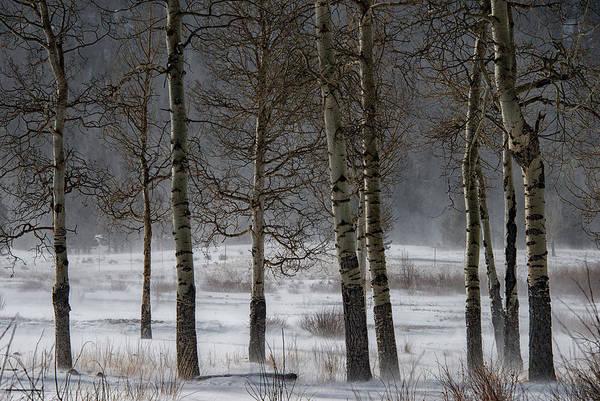 Photograph - Aspen Chill by Darlene Bushue