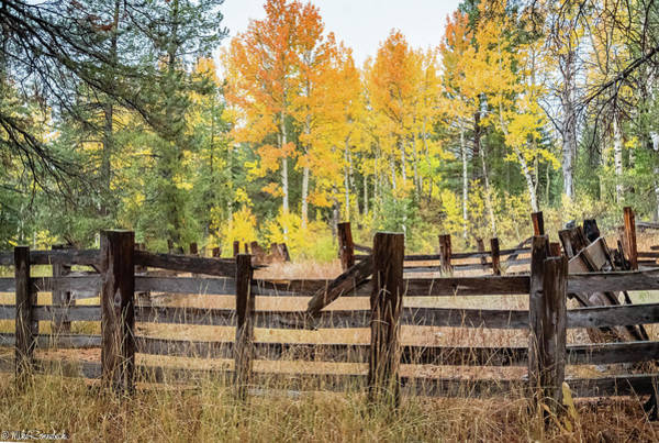 Photograph - Aspen Corral by Mike Ronnebeck