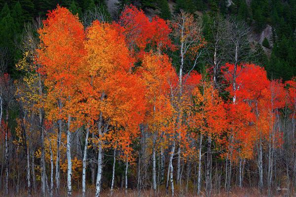 Photograph - Aspen Fire by Chris Steele