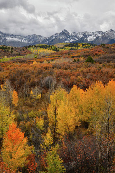 Photograph - Aspen Grove In Full Color At Dallas Divide by Ray Mathis