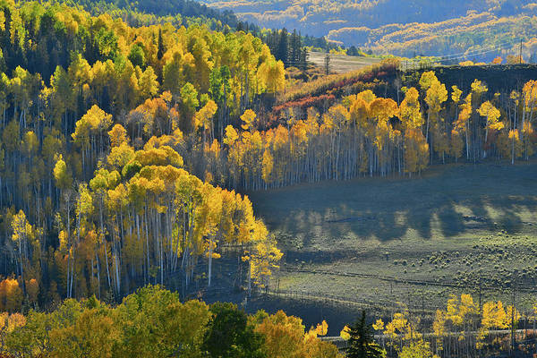 Photograph - Aspen Groves Aglow On Wilson Mesa by Ray Mathis