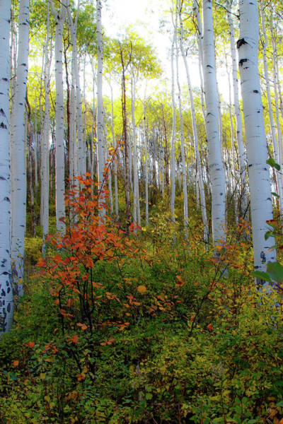 Wall Art - Photograph - Aspen In The Day by Kathy Mansfield
