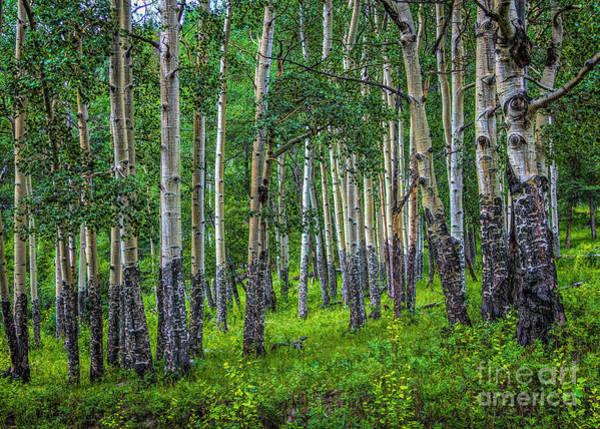 Photograph - Aspen by Jon Burch Photography