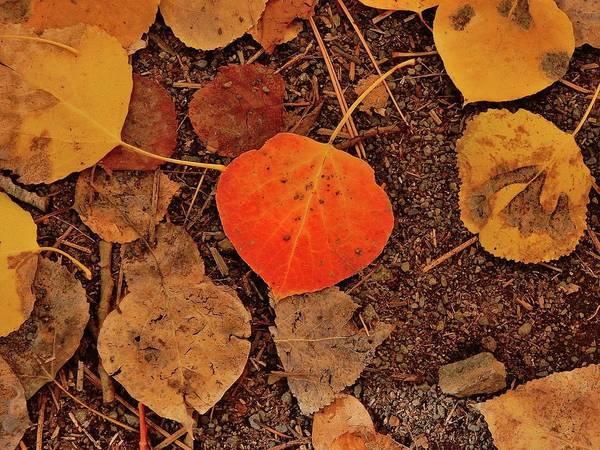 Wall Art - Photograph - Aspen Leaves by Joe Meche