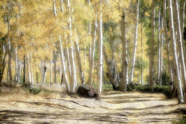 Wall Art - Photograph - Aspen Road by Donna Kennedy