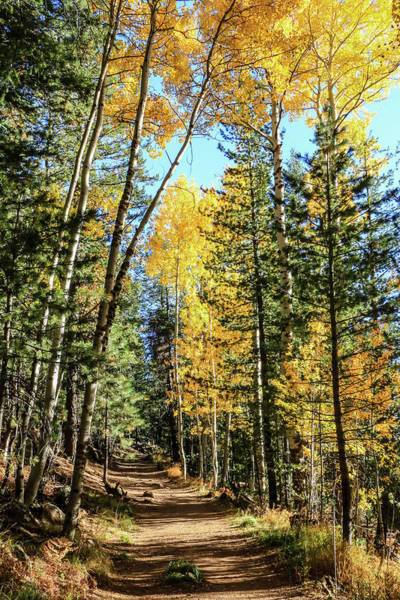 Aspen Trail Art Print
