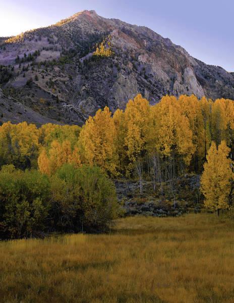 Photograph - Aspen Tree Meadow by Paul Breitkreuz