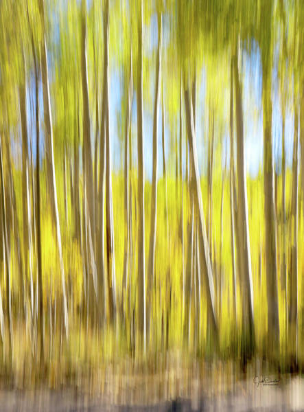 Photograph - Aspen Trees Abstract by Judi Dressler