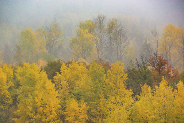 Photograph - Aspen Trees In Fog by John De Bord