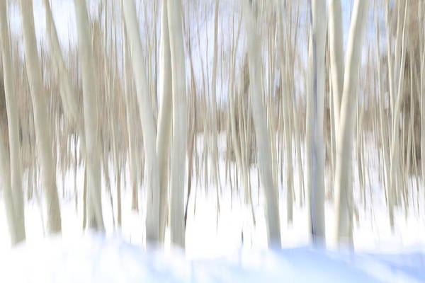 Wall Art - Photograph - Aspen Winter Abstract by Donna Kennedy