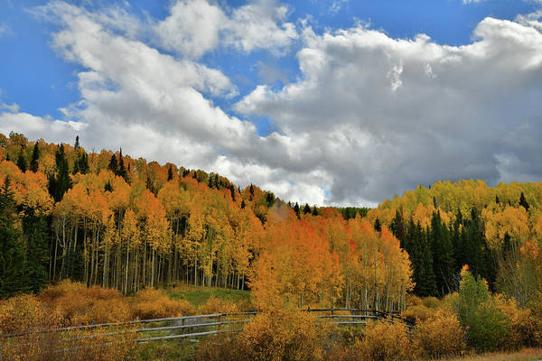 Photograph - Aspens Glowing Beneath Billowing Clouds Along Highway 145 by Ray Mathis