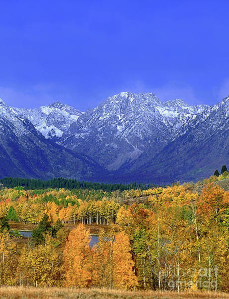 Photograph - Aspens In Autumn Grand Tetons National Park Wyoming by Dave Welling
