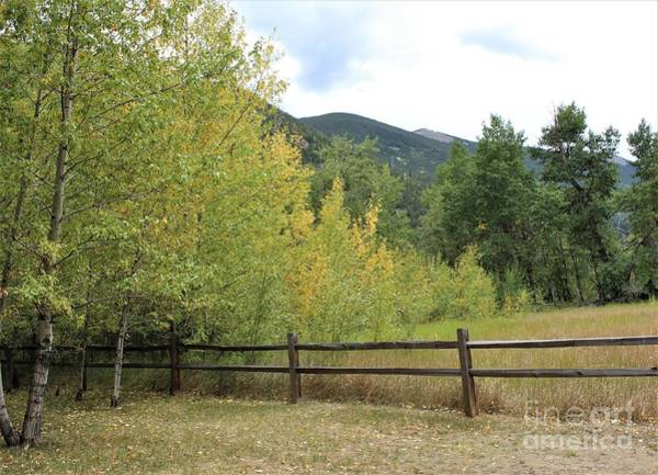 Photograph - Aspens In The Mountains by Tammie J Jordan