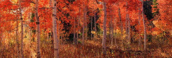 Photograph - Aspens Of Red And Yellow by Leland D Howard