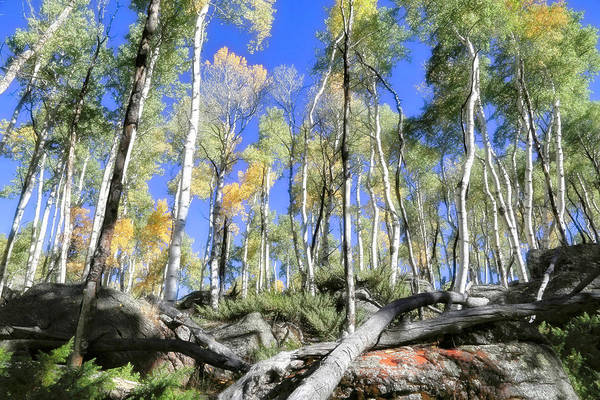 Wall Art - Photograph - Aspens On The Rocks by Donna Kennedy