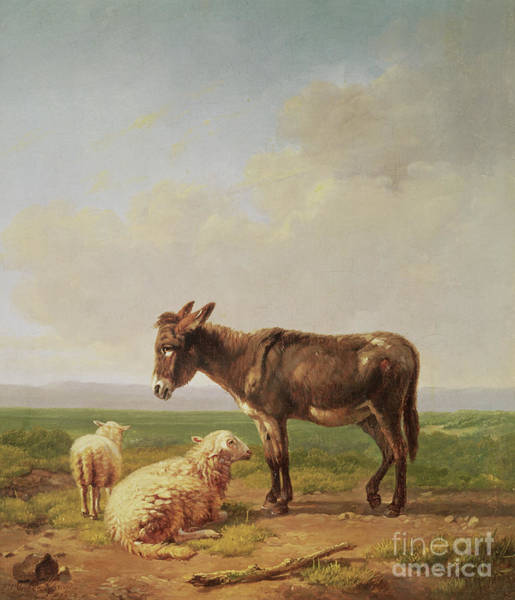 Wall Art - Painting - Ass And Sheep, 1849 by Eugene Joseph Verboeckhoven