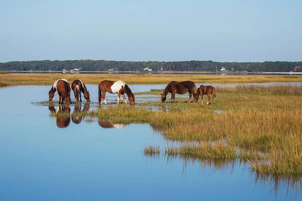 Wall Art - Photograph - Assateague Island Wild Horse Band by Stephanie McDowell