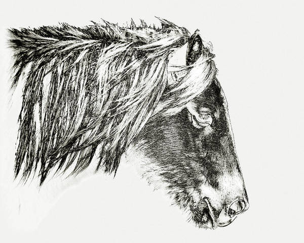 Photograph - Assateague Pony Sarah's Sweet Tea Sketch by Bill Swartwout Photography