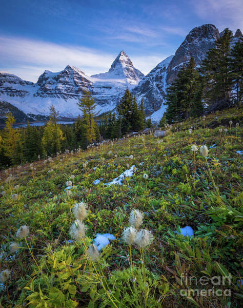 Wall Art - Photograph - Assiniboine Meadow by Inge Johnsson