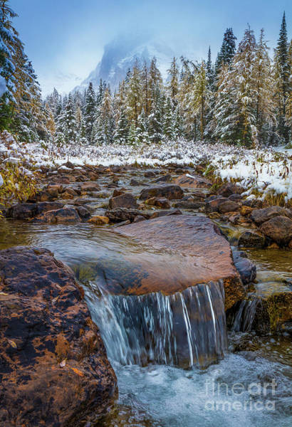 Wall Art - Photograph - Assiniboine Winter Stream by Inge Johnsson
