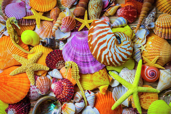 Wall Art - Photograph - Assortment Of Beautiful Seashells by Garry Gay