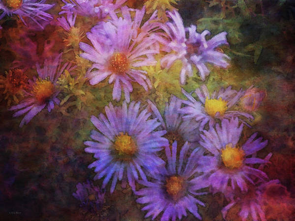 Photograph - Aster Expression 5763 Idp_2 by Steven Ward