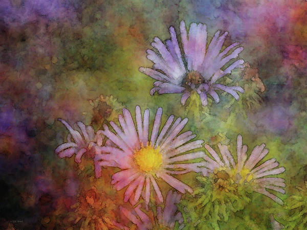 Photograph - Aster Sun 5724 Idp_2 by Steven Ward