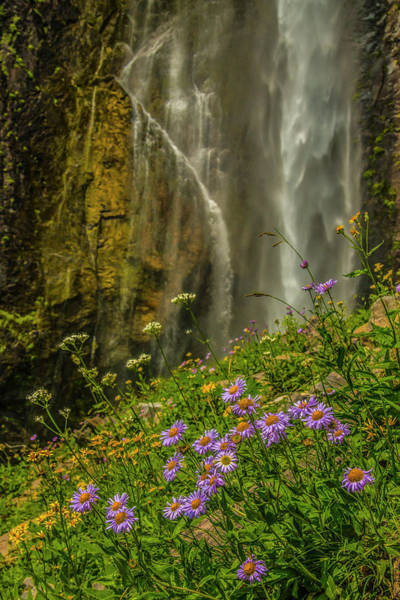 Photograph - Asters And Comets by Doug Scrima