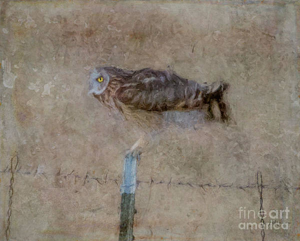 Fence Post Digital Art - At The Edge Of Night by Lyndie Mason Warner