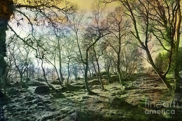 Digital Art - At The Edge Of The Wild Wood by Liz Alderdice