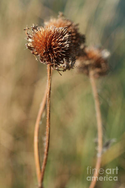 Photograph - At The End Of The Long Walk by Natural Abstract Photography