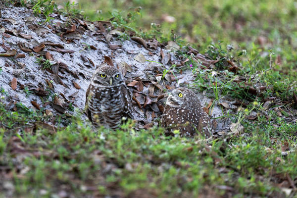 Photograph - At The Nest Site by Dan Friend