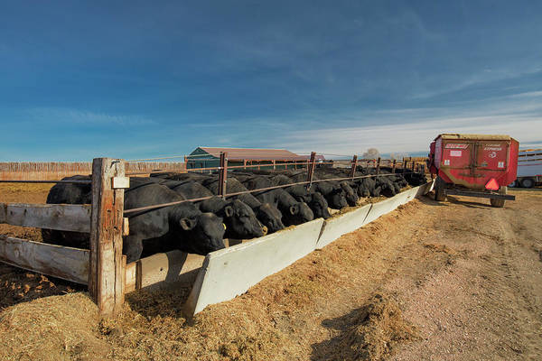 Trough Wall Art - Photograph - At The Trough by Todd Klassy