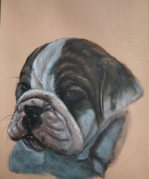 English Bulldog Painting - Auggie by Darlene Pyle