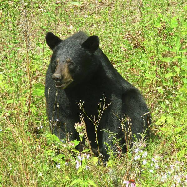 Photograph - August Bear 2 by Amy E Fraser