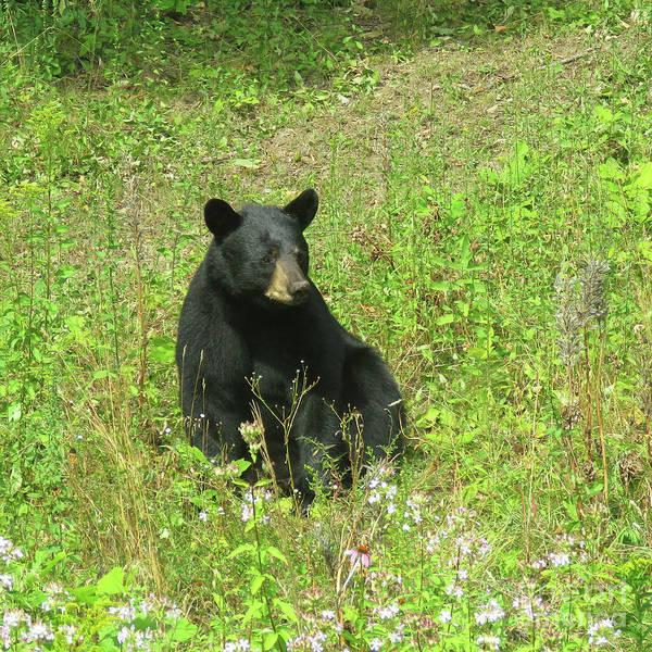 Photograph - August Bear 4 by Amy E Fraser