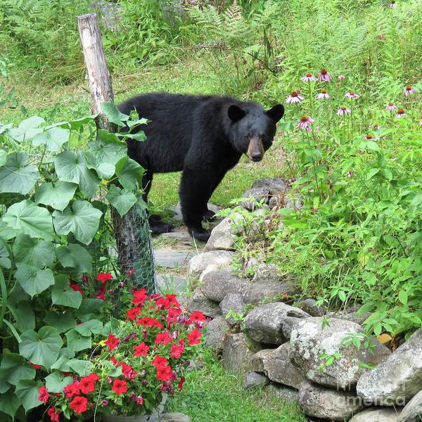 Photograph - August Bear 5 by Amy E Fraser