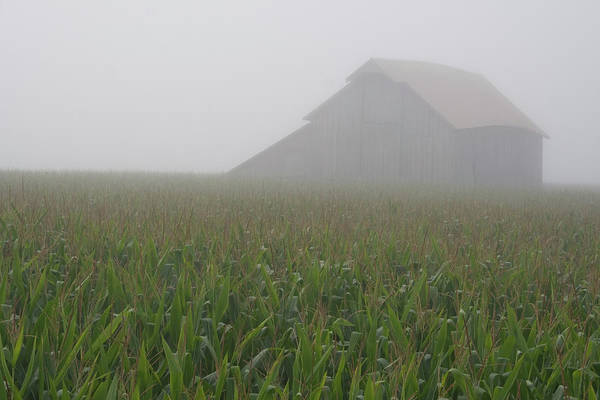 Photograph - August Morning Barn by Dylan Punke